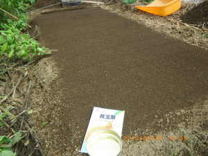 中生玉葱の播種