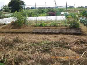 根菜類の畝