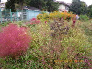 秋の花盛りの三田