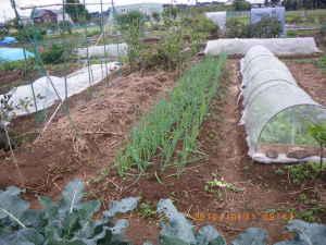 畑の排水性は良好