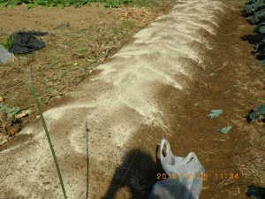 米ぬか、油かす、草木灰散布