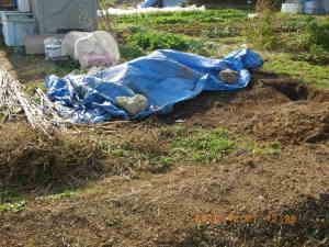 堆肥置き場周辺