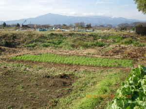 麦畑と丹沢大山