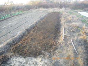 炭素循環農法にならった畝作り