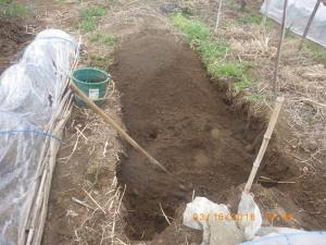 苗床のスギナ対策