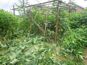 雑草に埋もれた果樹園