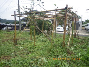 除草後のキウイの棚