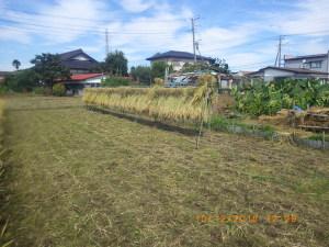稲刈り2日目