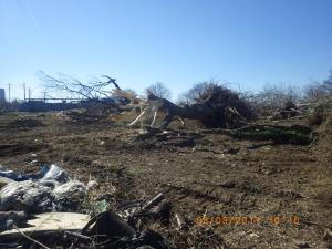 不法投棄されたゴミとケヤキの残骸