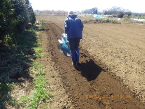管理機でサトイモ畝の溝切り