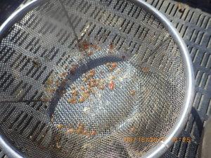 自家採種したサンマルツァーノ