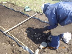稲モミを播種