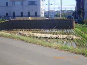 台風で倒れた稲架掛け