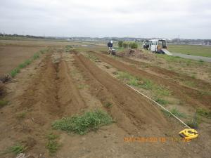 サトイモとヤツガシラの植え付け