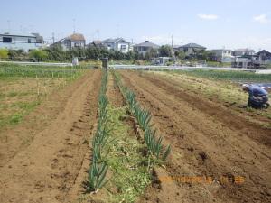 耕うんと除草を終えた畑