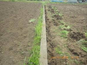 畦際の除草