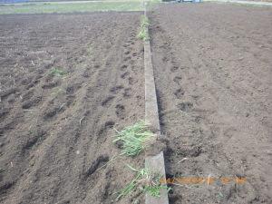 除草と耕うんを終えた田んぼ